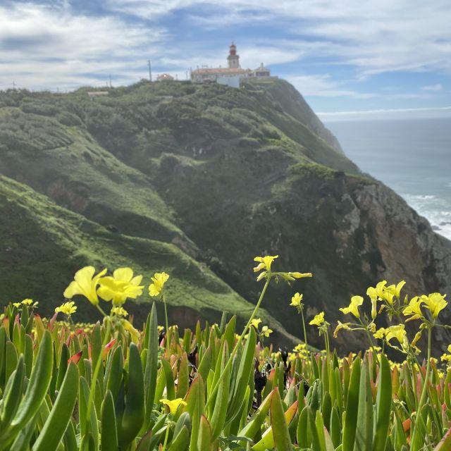 gelbe Blumen im Vordergrund, grüne Hügel mit Leuchtturm im Hintergrund.