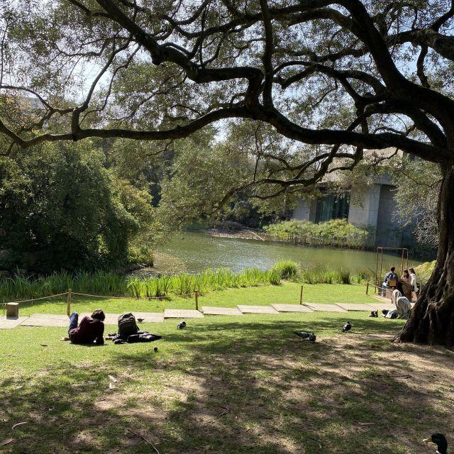 Park mit Blick auf einen kleinen Teich und einen großen verschlungenen Baum.