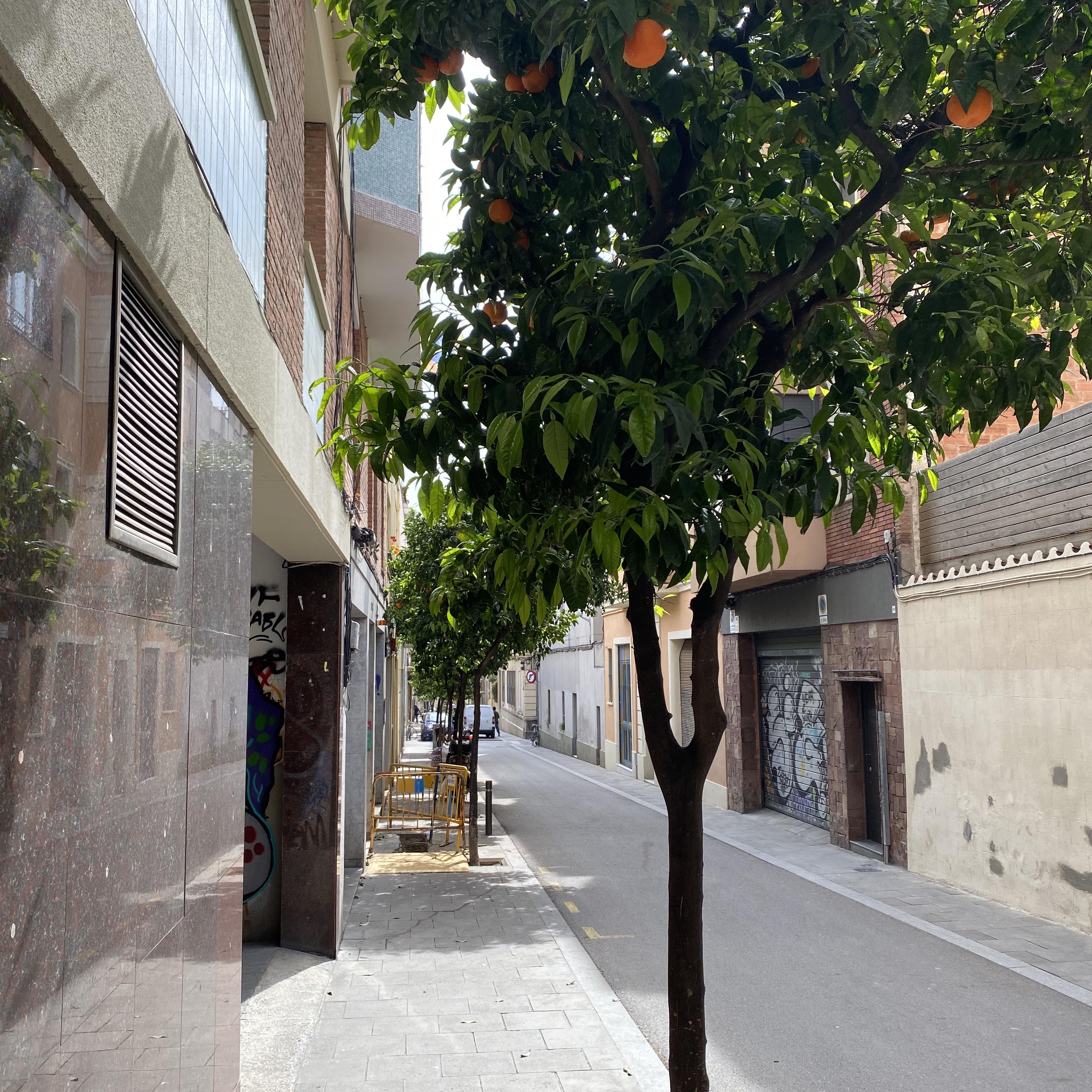 Corona-Update aus Barcelona