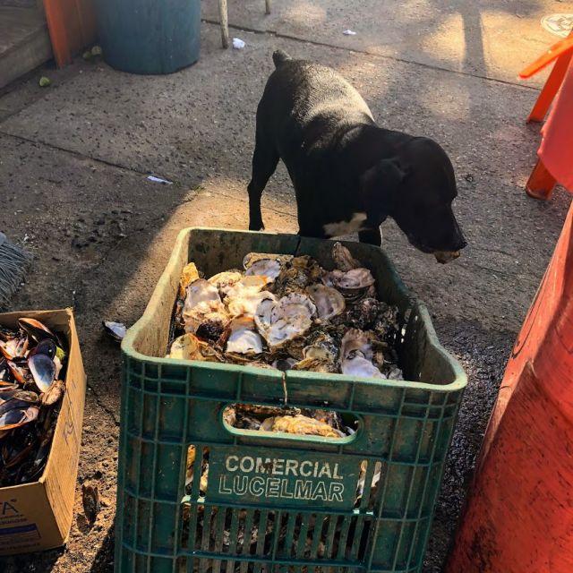 Ein Hund stiehlt leere Muscheln aus einer Box