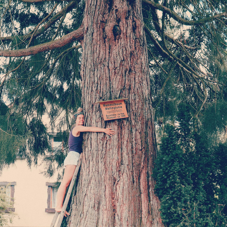 im Garten hinter'm Häusle steht ein kleines Mammutbäumle #redwood…