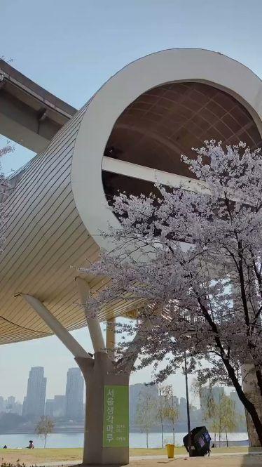 Auch im Ttukseom Hangang Park lassen sich die Spring Blossoms bestaunen. Mit…