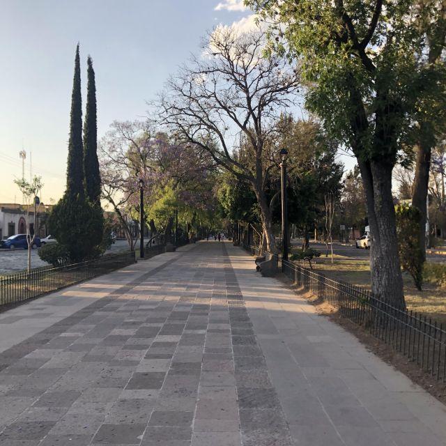 Fußgängerzone umrandet von blühenden Bäumen