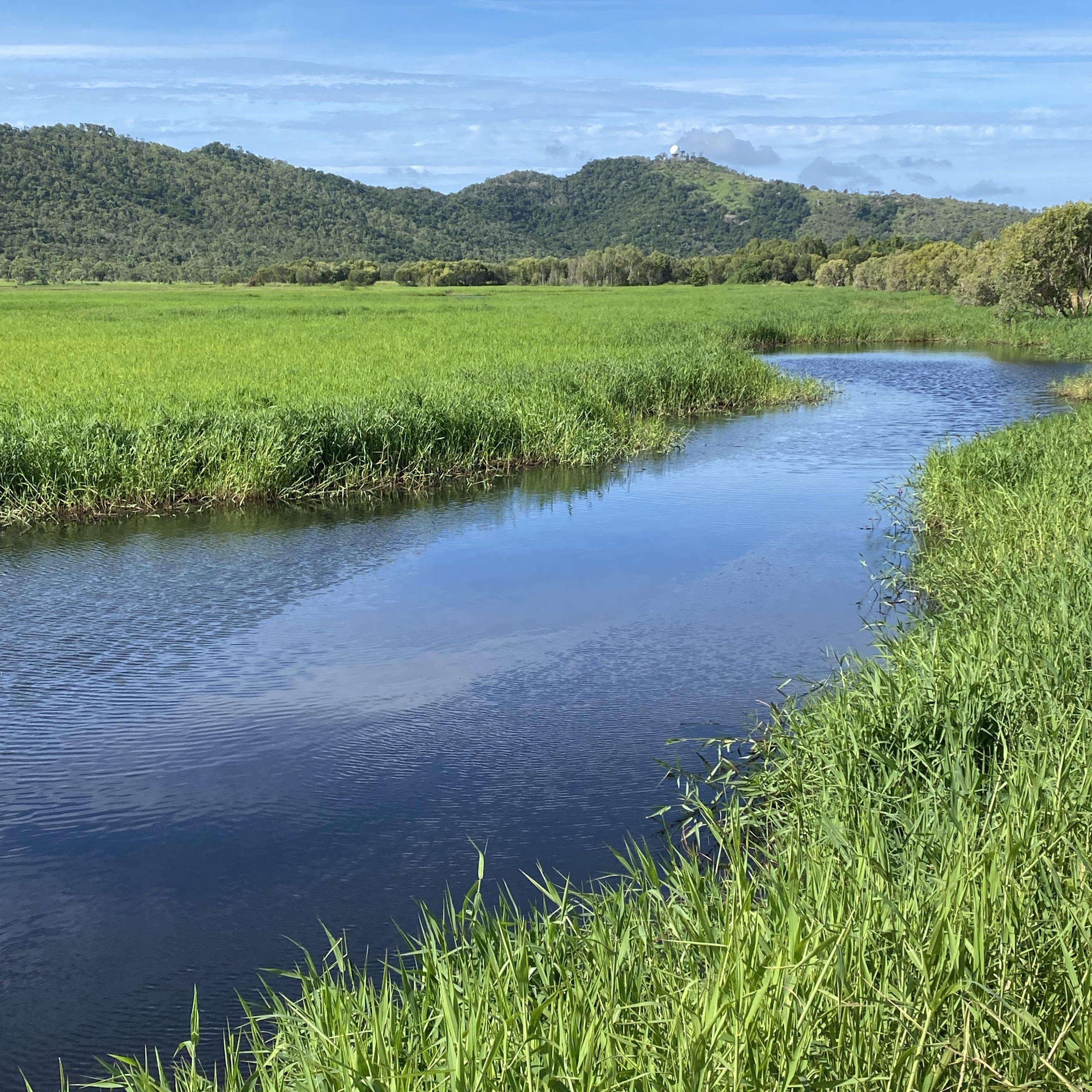 Die Townsville Common-Wetlands