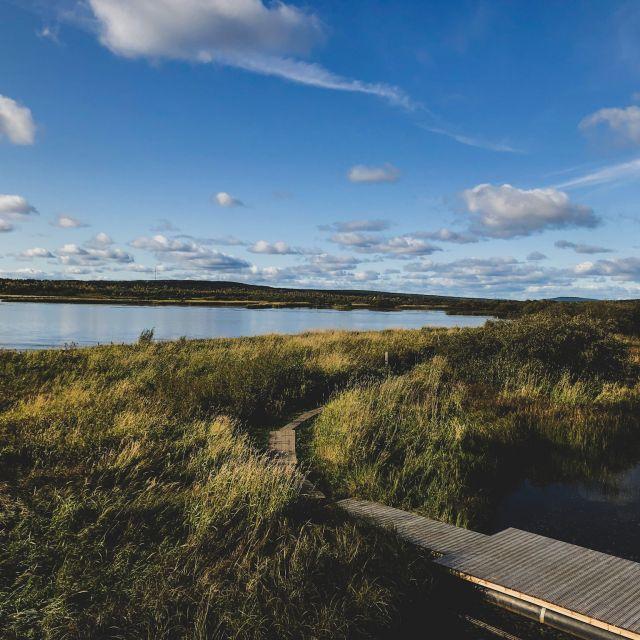 sumpfig-grasige Landschaft, blauer Himmel