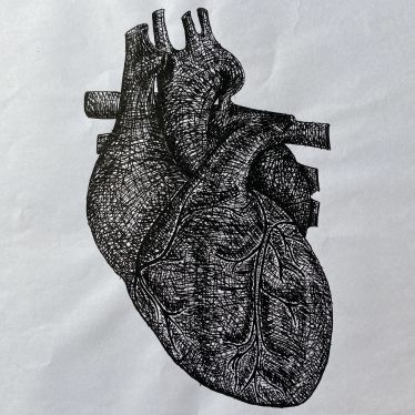 Man sieht ein anatomisches Herz, Tinte auf Papier.