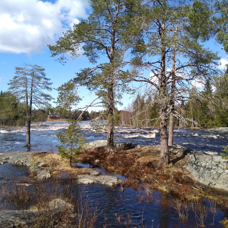 Nur 20 min von #oulu entfernt kann man diesen mitreißenden Fluss mit dem…