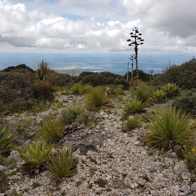 Wüstenähnliche Landschaft mit Kakteenarten