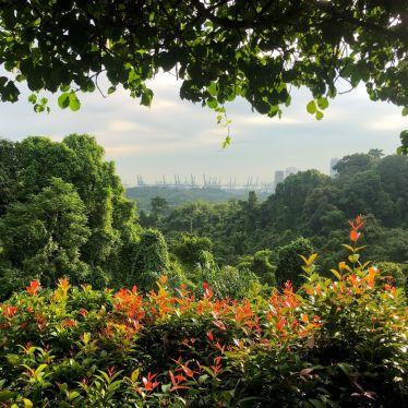 Mount Faber - Einer meiner Lieblingsparks in Singapur🇸🇬🐿🌿…