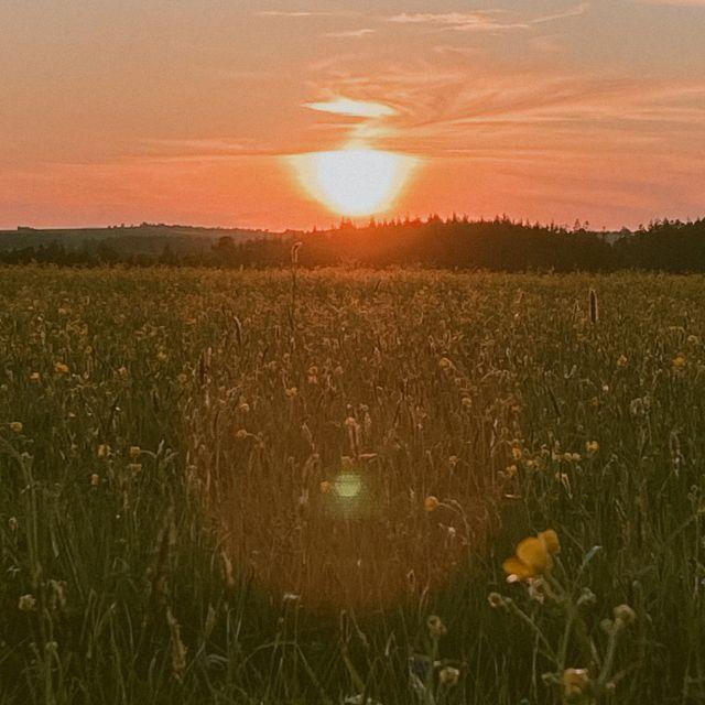 Sonnenuntergang auf der Wiese.