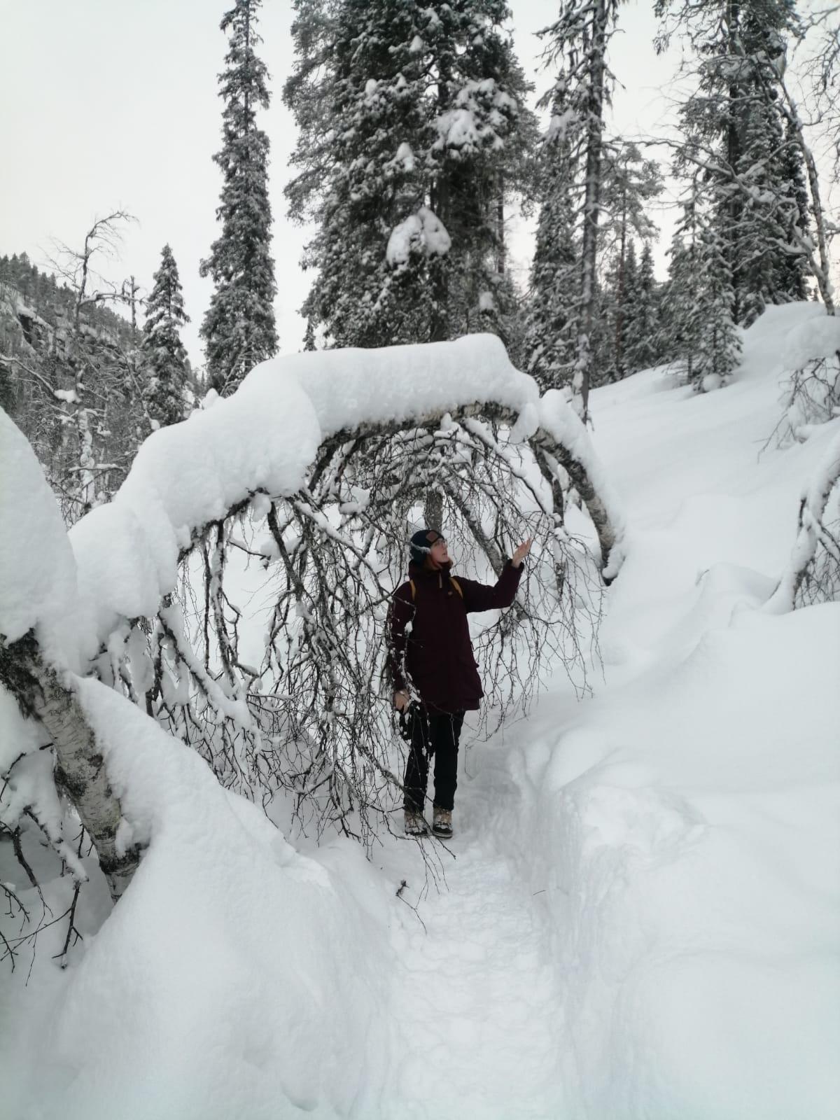Du solltest in Lappland studieren, wenn…