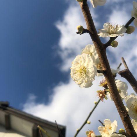 Eine weiße Blüte hinter blauem Himmel