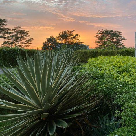 Sonnenuntergang und Pflanze Malaysia