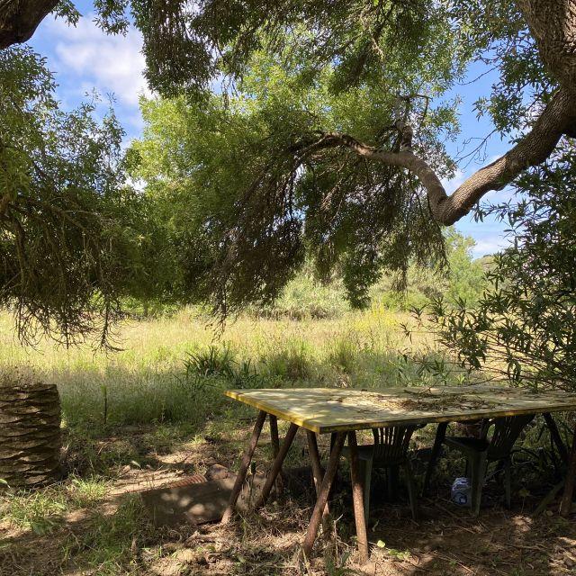 Alter Tisch unter großem Baum im Garten.