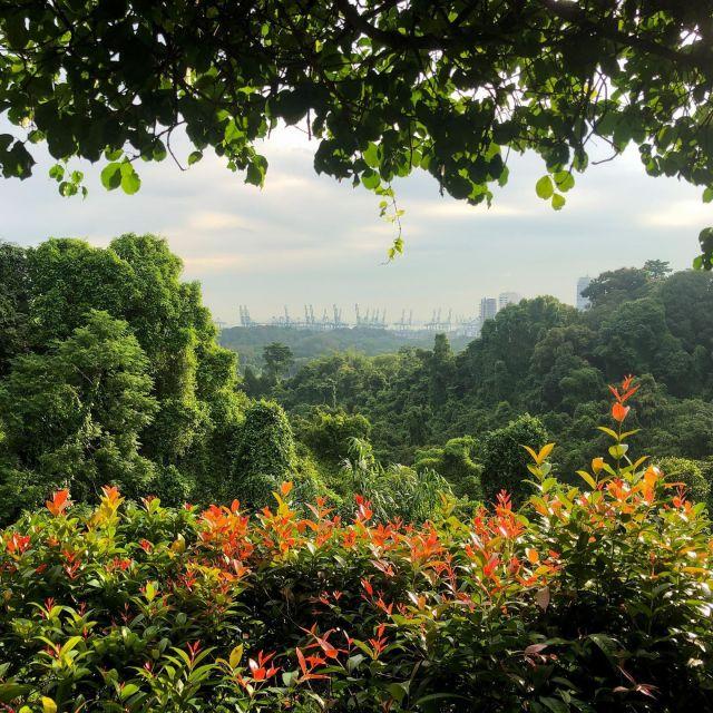 Natur in Singapur.