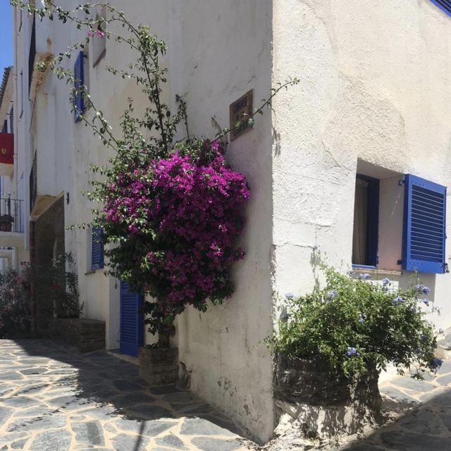 Ein Haus mit blauen Fenstern und lilanen Blumen an der Wand.