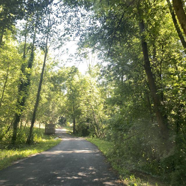 Eine kleine enge Straße, umgeben von Bäumen.