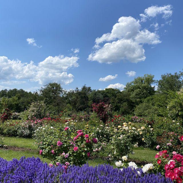 Untere Hälfte Rosengarten, darüber blauer Himmel mit einzelnen Wolken