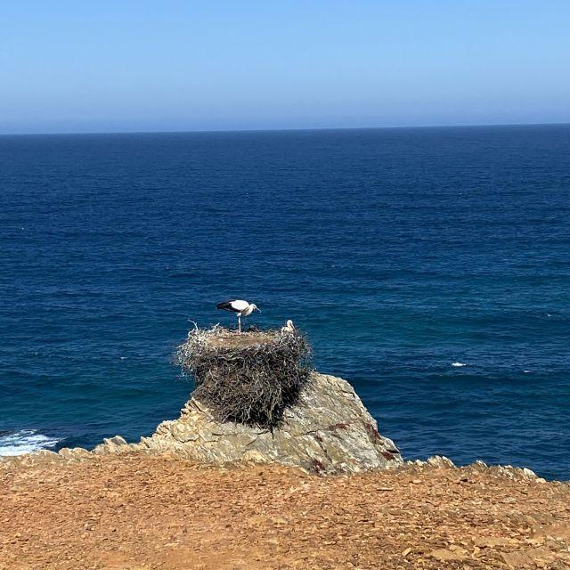 Storchennest auf einer Klippe vor dem Meer.