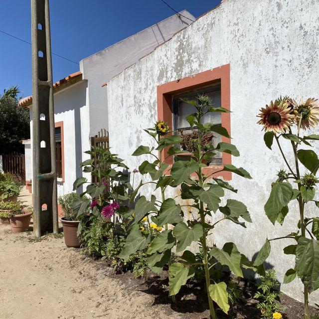 Haus mit Sonnenblumen.