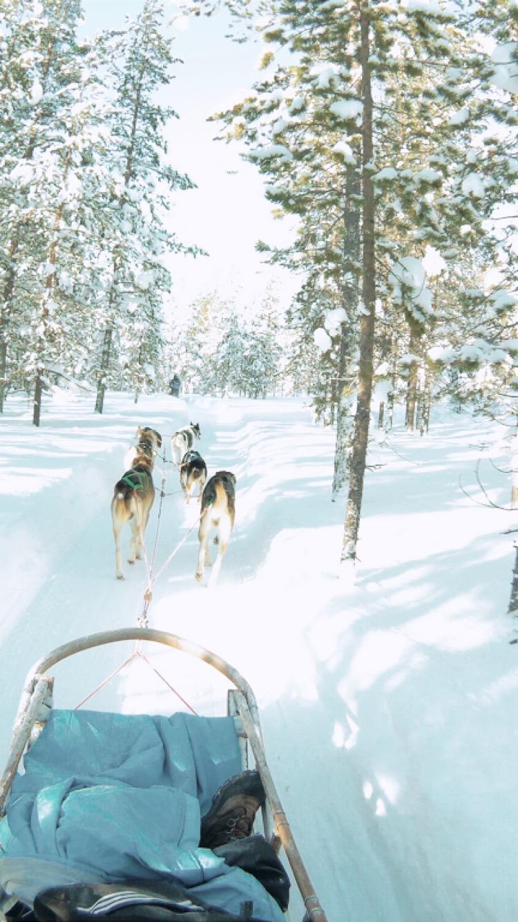 sechs Huskies ziehen einen Schlitten durch den verschneiten Wald