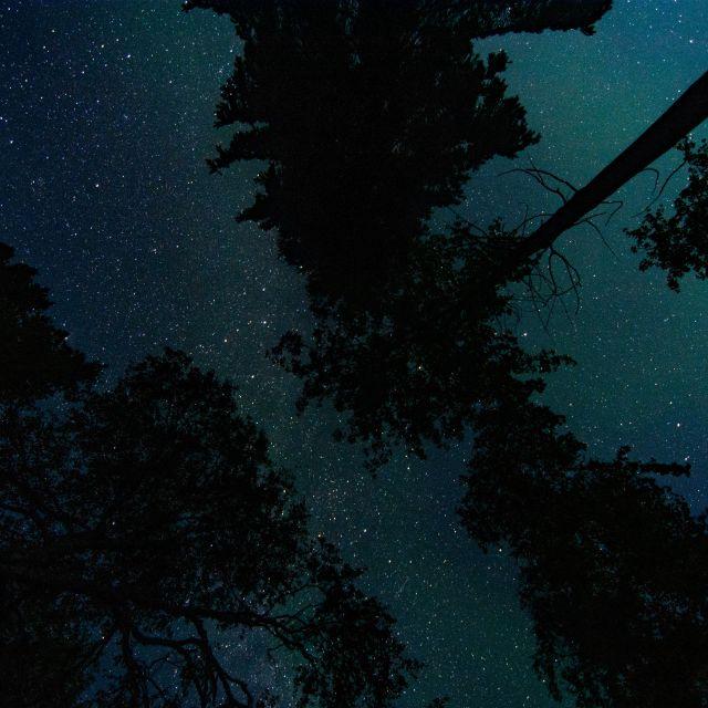 Blick in den Sternenhimmel, der von Tannen umgeben und von einem blauen Schimmer durchzogen wird.