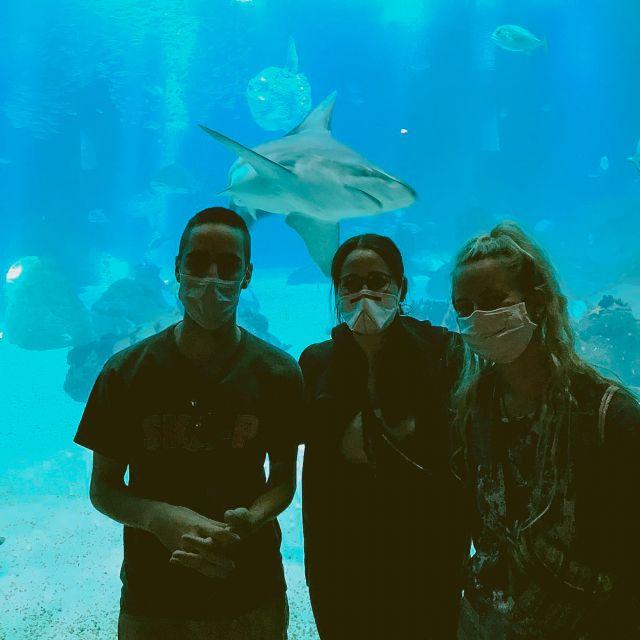 Drei Freunde im Aquarium und Hai im Hintergrund.