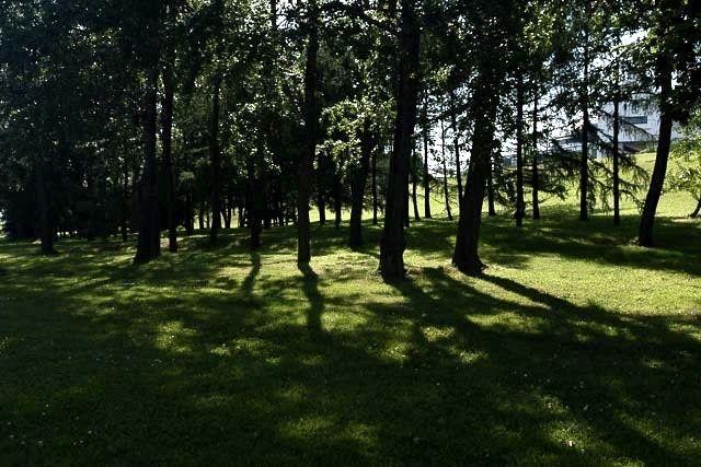 Grüne Wiesen und Wald und keine Menschen zu sehen.
