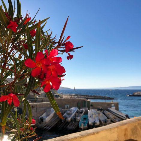 Sommertage in Marseille 🌞🌊…