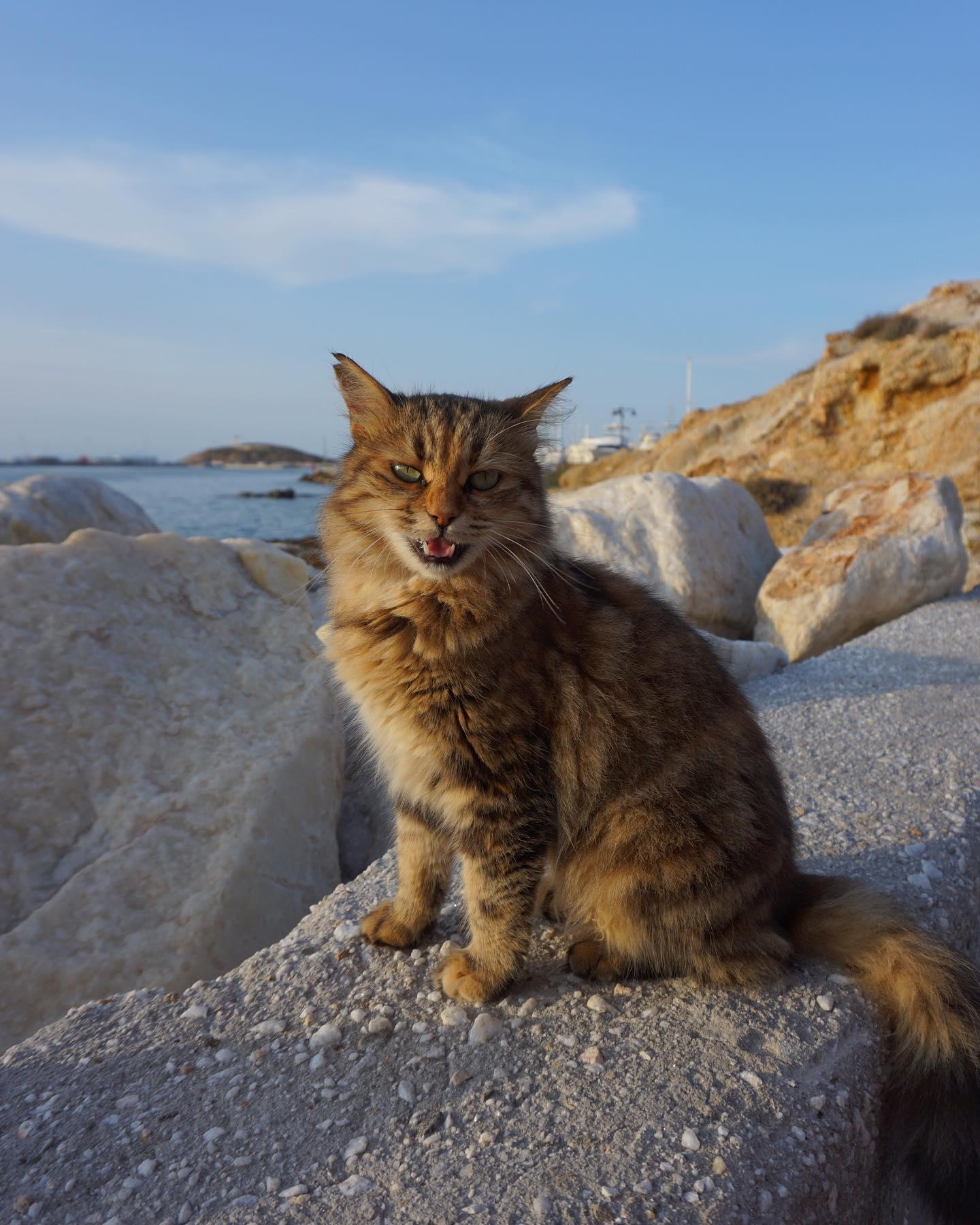 Ob auf dem Festland oder auf den Inseln, in Griechenland läuft dir immer…