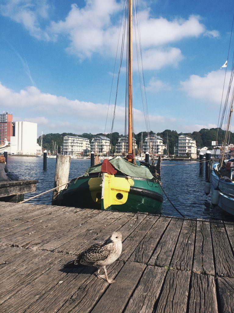 Bootssteg an der Flensburger Förde auf der eine Möwe sitzt.