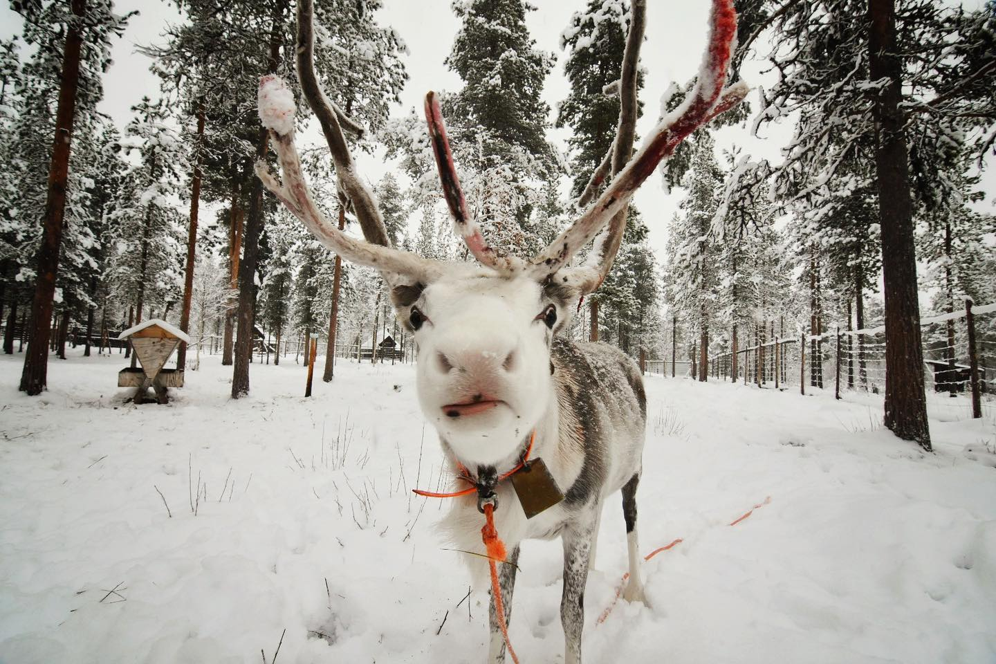 Rudolph, is it you?❄️🦌…