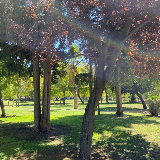 Bäume im Park auf einer Grünfläche.