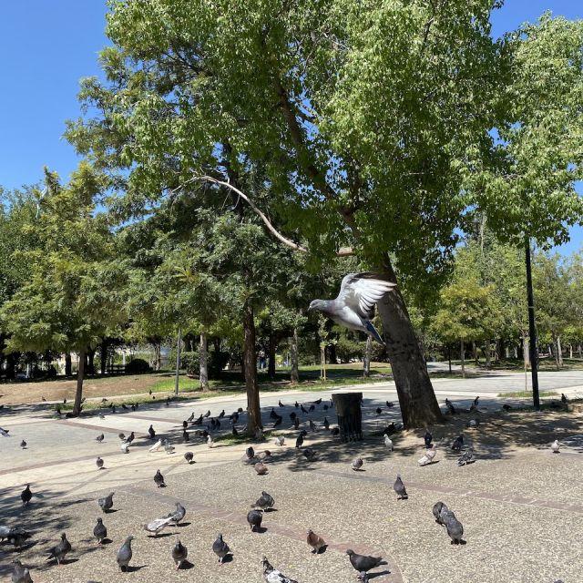 Einige Bäume auf einer betonierten Fläche sind zu sehen. Im Vordergrund fliegen und stehen Tauben.