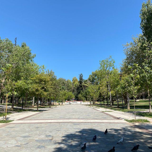 Rechts und Links sieht man grüne Bäume, durch die Mitte führt eine betonierte Straße.