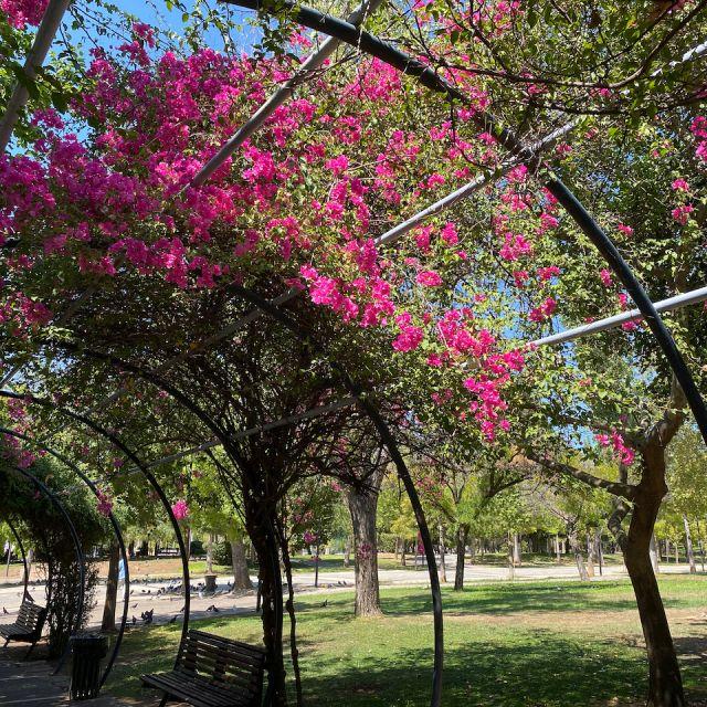 Zäune mit pinken Blumen im Vordergrund. Im Hintergrund sieht man die Grünfläche des Parks.