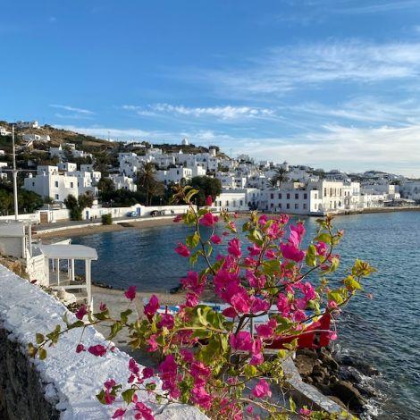 Im Vordergrund befindet sich eine Pflanze mit pinken Blüten und im Hintergrund die Promenade von Mykonos.