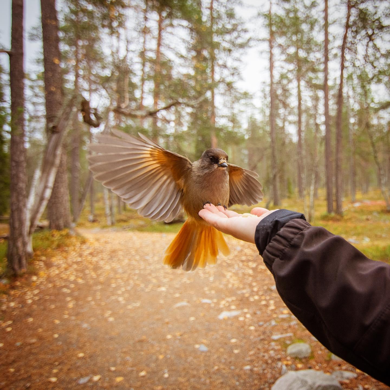 """Darf ich vorstellen - mein neuer Lieblingsvogel """"Kuukkeli""""😍…"""