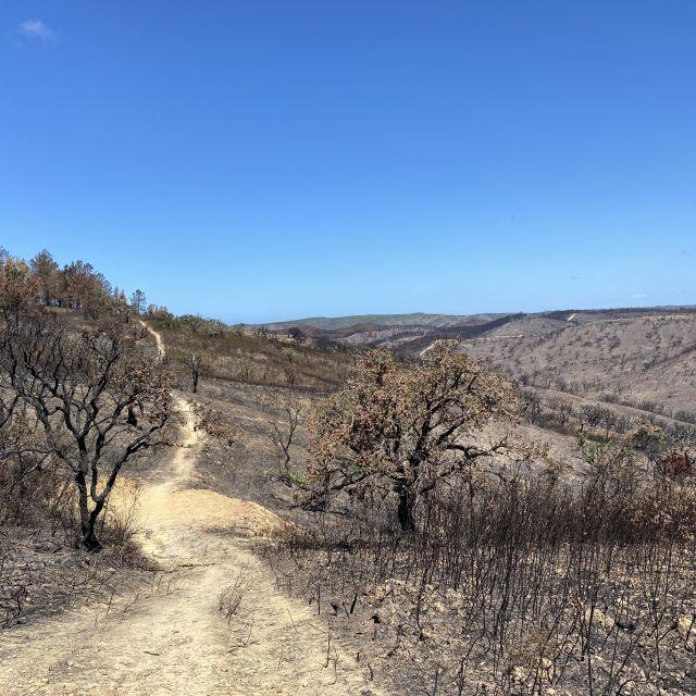 Verbrannte Hügel und Sträucher.