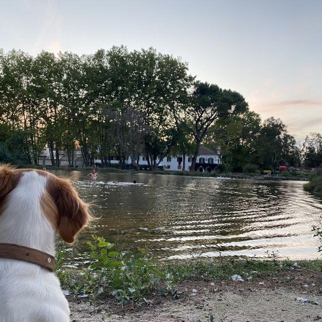 Blick auf See mit Hund.