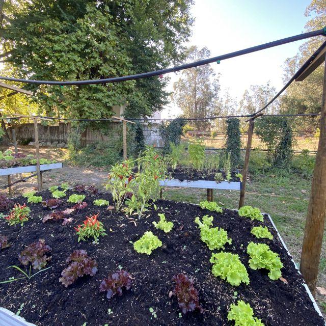 Hier wird Salat angebaut.