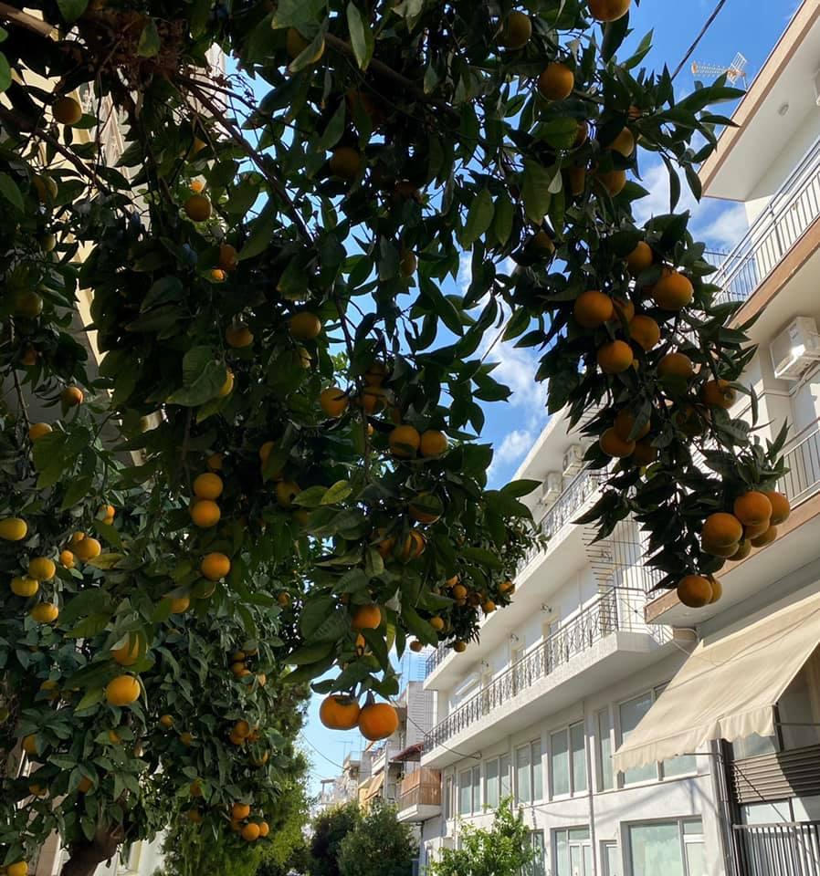 Winterzeit ist Mandarinenzeit in Griechenland. 🍊An diesem schönen Anblick…