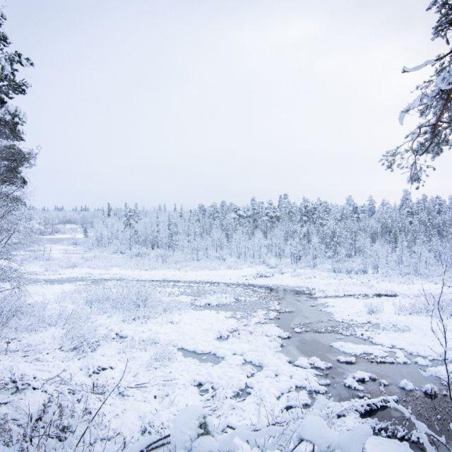 Ein zugefrorener Fluss vor verschneitem Wald