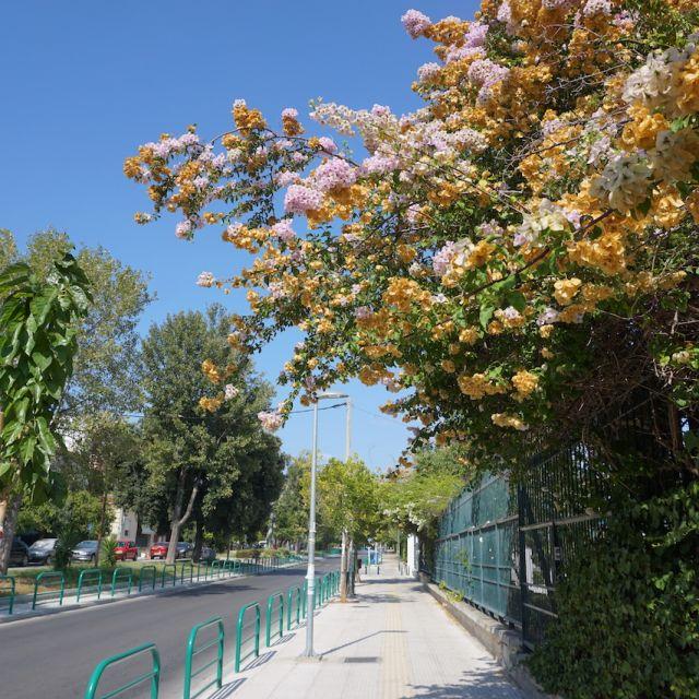 Im Vordergrund sind Büsche mit bunten Blüten zu sehen und im Hintergrund der Bürgersteig und die Straße.