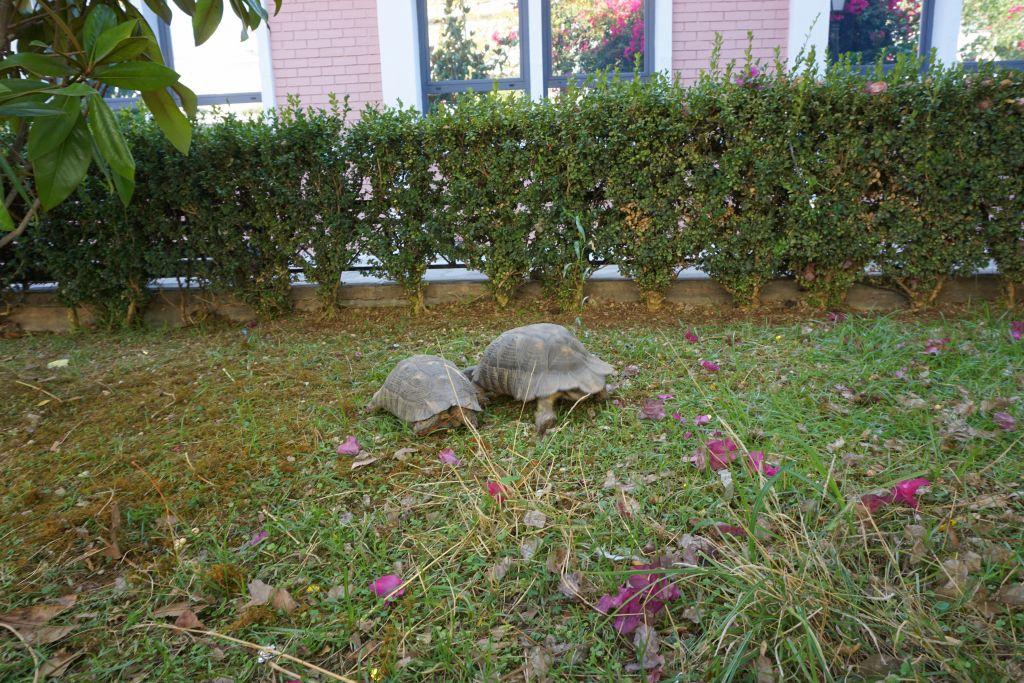 Im Vordergrund ist eine grüne Wiese mit zwei Schildkröten zu sehen. Im Hintergrund befindet sich das Universitätsgebäude.