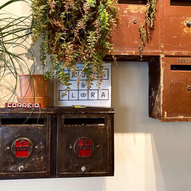 Alte Briefkästen hängen an der Wand und grüne Pflanzen wachsen aus den Briefschlitzen heraus.
