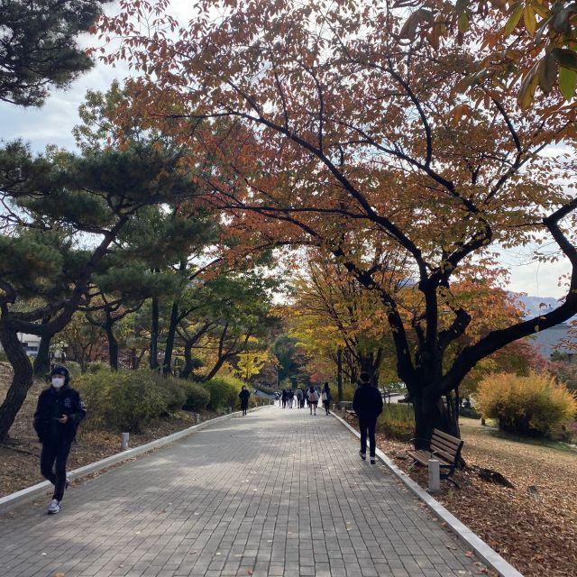 Ein Weg mit ein paar Studenten, ausgeschmückt von Herbstlaub