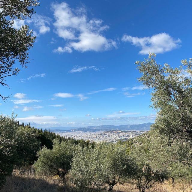 Im Vordergrund ist ein kleiner Wald aus Olivenbäumen zu sehen. Im Hintergrund ist die Stadt Athen in der Ferne zu erkennen.