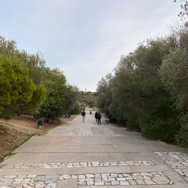 In der Mitte des Bildes befindet sich ein breiter und leerer Fußweg, umzingelt von grünen Olivenbäumen.