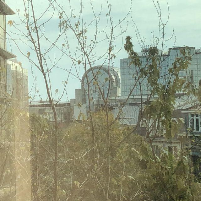Zwischen den Bäumen hindurch sieht man die Kuppel des Europäischen Parlaments. Blick aus meinem Büro.
